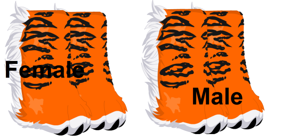 Terrific Tiger Shoes